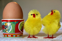 Chick to chick (uomoelettrico) Tags: easter egg chicks pasqua uovo pulcini