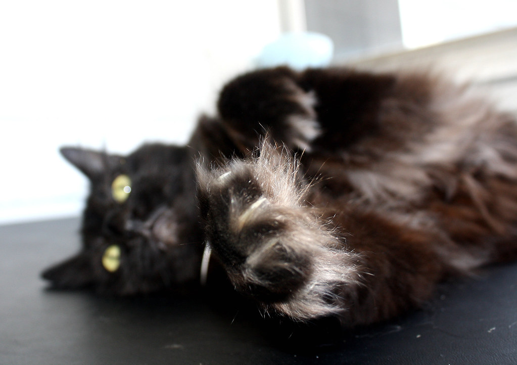 P crazy cat 2