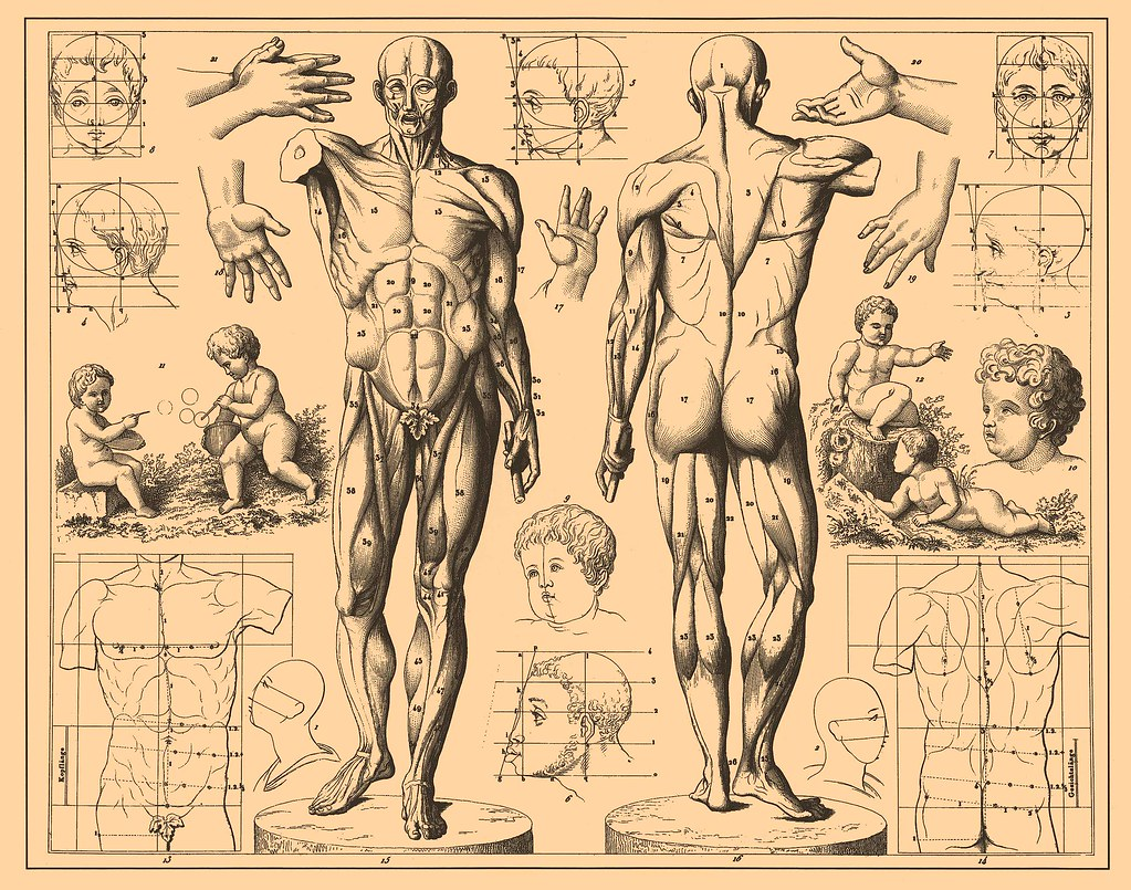 The World\'s Best Photos of anatomy and publicdomain - Flickr Hive Mind