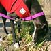 Lana Loves Crabgrass