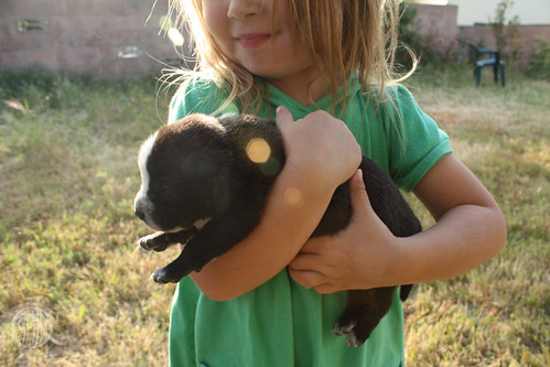 Bug holds the GuineaPup