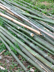 bamboo poles for garden project