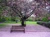 IMG_2925 (shame00) Tags: cadogangardens may2010 may12010