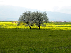 Sisters (Habib Syyd) Tags: green nature beautiful yellow landscape spring nice nikon iran coolpix tabriz  azarbaijan azarbayjan coth  supershot  l100 azerbaycan platinumphoto flickraward theunforgettablepictures sayyadi coth5