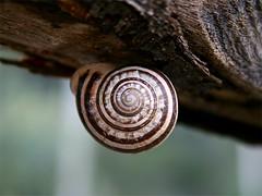 Spirale a testa in giù (PhotoLab XL) Tags: lumaca spirale chiocciola atestaingiù