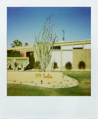 Palm Springs Ocotillo in Front Yard (kathyv) Tags: california ca blue sky orange color building tree green film window grass architecture modern century polaroid drive avocado view sunny palm springs 600 instant mid sunnyview 1959 ocotillo 2876