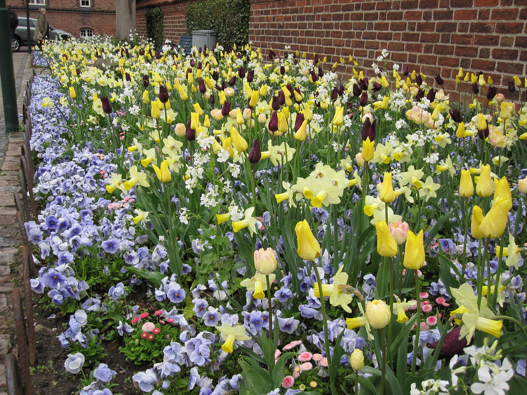 Springflowers in Roskilde