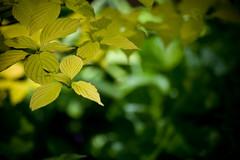 Botanic Garden, Montreal (Cyrielle Beaubois) Tags: canon garden french photo montral montreal jardin botanic amateur botanique franais photographe sigma1770mm f2845 eos400d sigma1770mmf2845dcmacro dcmacro cyriellebeaubois cyriellebeaubois