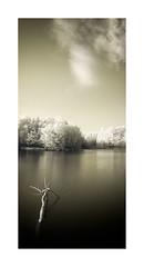 Mystic Waters #1 (frank_bunnik) Tags: trees cloud lake water netherlands movement meer nederland infrared brabant mystic beweging mystiek infrarood g10 copyrightfrankbunnik