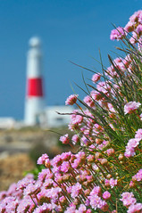 To the lighthouse (petervanallen) Tags: pink blue red sky lighthouse white flower portland focus rocks dof bokeh depthoffield thrift portlandbill seapink