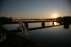 Rise and Shine... (DoktorChaos) Tags: flower wales sunrise canon landscape dawn bokeh kitlens reservoir 1855mm daybreak eos20d llandegfedd
