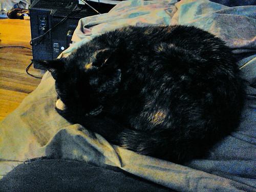 Pile of Fur