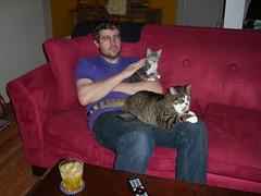 Cat overload (Iron Jenny) Tags: cat jack kitten tabby kitty juniper joon