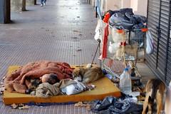 Crisis...cuando la ayuda humana no llega / Crisis ... when human help fails (Ale Bujj) Tags: amigo calle amor homeless perros animales amistad pobreza miseria
