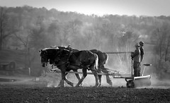 A Glance My Way (miche11) Tags: boy sunset horses blackandwhite bw horse boys field rural landscape dusk farm documentary amish plow dust thechallengefactory