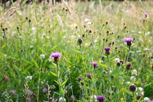 34 Dale Heybrook Garden 2009-06-29