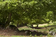 Camposecco_MG_8685 (candido33) Tags: roma alberi natura lazio appennino bosco doline faggi montisimbruini carsismo cameratanuova camposecco parconaturaledeimontisimbruini faggete altopianodicamposecco