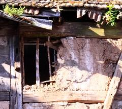 Gutter as a flowerpot (:Linda:) Tags: fern abandoned window nature germany town open decay natur ruin thuringia ruine flowerpot farn halftimbered fachwerk dachrinne meiningen gewinner timberframing windowwithflowers natureisthewinner blumenintöpfenoderkästen natureiswinning