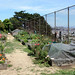 Garden on top of Corona Heights Hill
