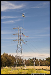 Transmission Line Maintenance (cyberdoug) Tags: tower workers power traintracks helicopter electricity job signal highvoltage highrisk transmissionlines
