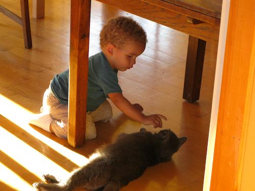 Feeding the cat 1