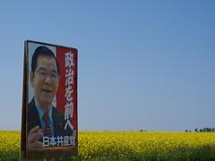 菜の花畑で「政治を前へ」