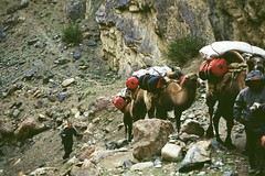 Packed Camels (Joost Arnold) Tags: expedition arnold hike k2 anita patricia joost ard berben