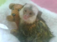 Wayne's monkey