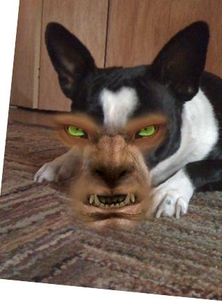 Lemon is a werewolf