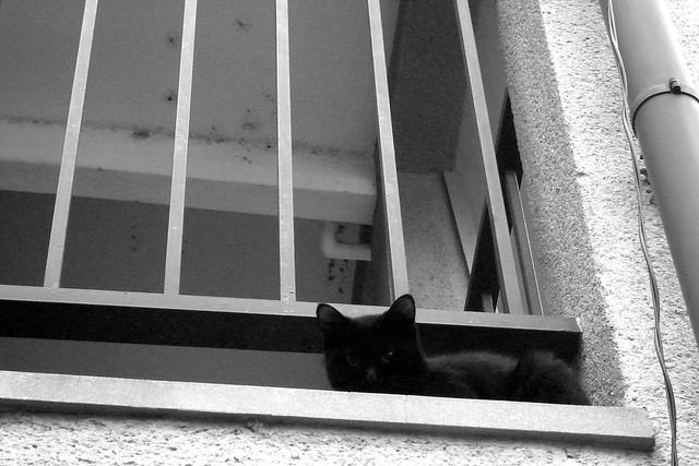 Today's Cat@2010-11-02