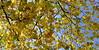 autumn (raghavvidya) Tags: park autumn color colour tree green london fall leaves tag3 project tag2 tag1 explore 365 2010 day357 project365 raghavvidya