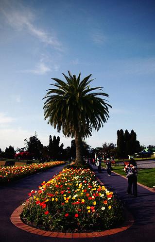 Gouvernment Park in Rotorua