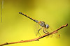 Equation!! (mzna al.khaled) Tags: macro green colors beautiful yellow canon focus insects natrue طبيعة 50d ماكرو حشرات macrolife كلوزاب mzna