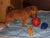 Hunde - 53 (Manfred Lentz) Tags: pets dogs puppy pups puppies hunde littledogs welpen hündchen babydogs whelps