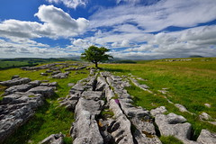 The Winskill loner (images@twiston) Tags: loner summer alpine flowers blue sky cumulus cloud clouds thewinskilltree alone hawthorn tree thelimestonetree winskillstones winskill stones scar dales national park solitarytree lone solitary limestone pavement grikes clints northyorkshire yorkshire limestonepavement lonetree fell rock rocks gnarled gnarly 3peaks yorkshire3peaks whernside ingleborough penyghent landscape yorkshiredalesnationalpark fields grass moors moorland moor langcliffe imagestwiston classicdales godsowncountry ribblesdale farm farmland wideangle ultra wide angle ultrawide hoya polarizer cirpl cpl