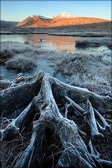 Rannoch Moor Frost (Billy Currie) Tags: morning winter sunlight mountain cold reflection tree ice water sunrise dead scotland highlands frost heather hill peak og stump glencoe rotten root moor tyndrum munro rannoch welcomeuk