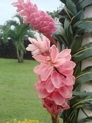 Samoa Photo