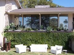 Patio cactus garden