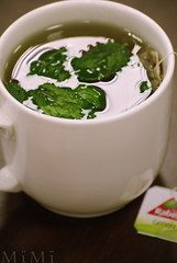 Green (M ï M ï) Tags: family green tea mint dite rabei