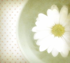 Dishin' Up Daisies (luvpublishing) Tags: white flower green texture nature floral dish bowl overlay polkadots daisy picnik layered fauxvintage explored memoriesbook magicunicornverybest softdreamyandethereal