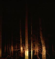 tervetuola (Go ask Weyprecht) Tags: trees film espoo pines agfasuperisolette finland2009 edovècheandraioggi thisiswheremyfinnishgrandparentslive questafotomiricordailpostoincuiandròdomani chissàseanchetupensiaquelloacuistopensandoio mmmacosa