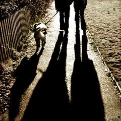 Walkies! (LieselRose) Tags: family dog goldenretriever shadows walk ollie carol martyn flickrchallengegroup flickrchallengewinner