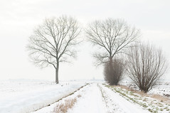 Winter in de polder, populieren overbelicht  Winter in our polder; overlighted. (petervandelavoir) Tags: winter mist snow misty fog populier sneeuw foggy nederland lith highkey whitesnow polder willows 1000 aquarel landschap 1000views noordbrabant mistig winterlandscape snowlandscape poplars wilgen paintinglike sneeuwlandschap winterlandschap populieren foggylandscape overlighted mistylandscape dorpaanderivier villageneartheriverside avillageneartheriverside lithdorpaanderivier mistiglandschap