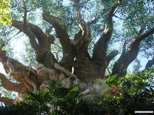 Photos-images-nature-vert-voyages-Colonia-Bariloche-Londres-Promenade-Plantee-Coulee-Verte-Patagonie-Iguazú-Magic-Kingdom-Madrid-Branly-Everglades-Rome