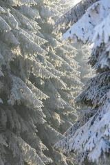 Ardennen 28-12-'09 t/m 04-01-'10 (Thanks for reaching 200.000 views!) Tags: ardennen nature natuur ice ijs snow sneeuw sourbrodt botrange elsenborn rocherath hogevenen hautesfagnes edelhert reddeer