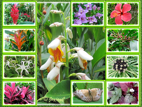 Collage of flowers and a butterfly, seen at Felda Residence Hot Springs (Sungai Klah Hot Springs Park)