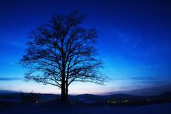 The sentinel (photon tamer) Tags: longexposure winter sunset sky snow plant tree nature silhouette night germany stars geotagged bavaria star twilight europe nightshot sundown availablelight branches sony noflash twig bluehour alpha 700 geo:lat=49209474 geo:lon=12227499