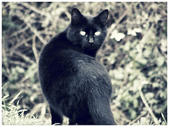 18/365 The Black Cat