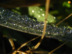(Alejandro Imperial) Tags: morning winter light detail macro green nature grass rain diamonds canon drops rainbow god bokeh fresh powershot dew thankful jewels waterdrops refractions srops sd1000