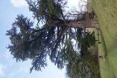 DSC00322 (Sarah Bailey) Tags: park dyrham 170110